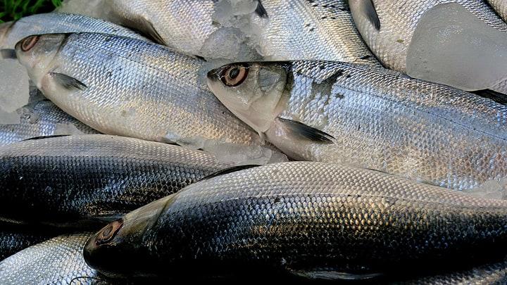 fresh milkfish or bangus